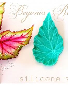 BEGONIA F7